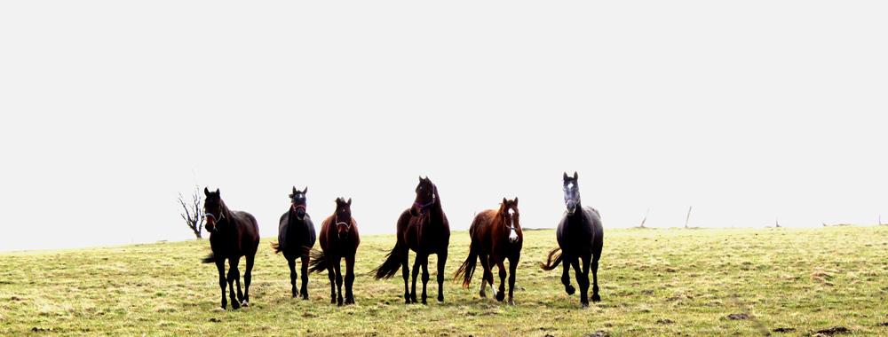 Pferde auf der Weide direkt neben der Halle